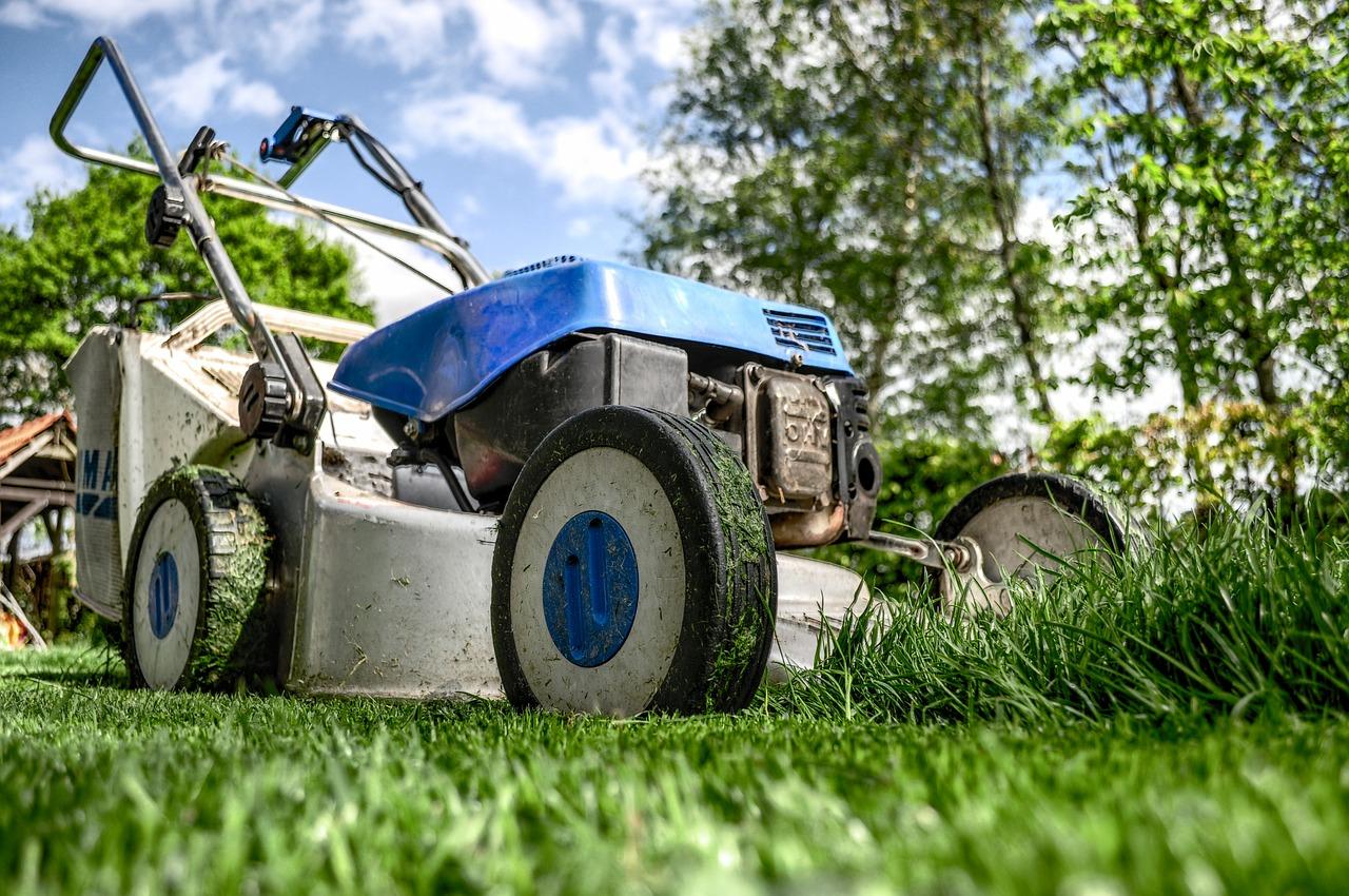 کوتاه کردن درختان حیاط برای جلوگیری از ورود سارقین به خانه