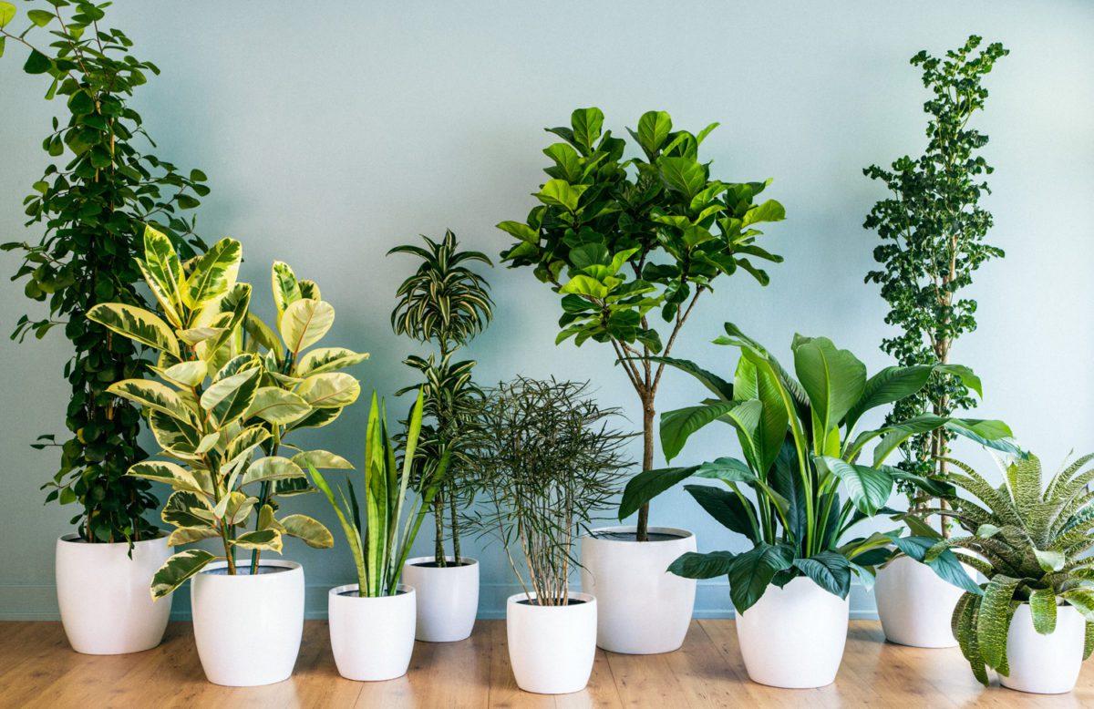 تاثیر گل و گیاه در دکوراسیون داخلی منزل